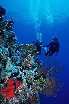 coral buoancy