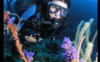 UtilaAggressor-Diver+Corals[1]