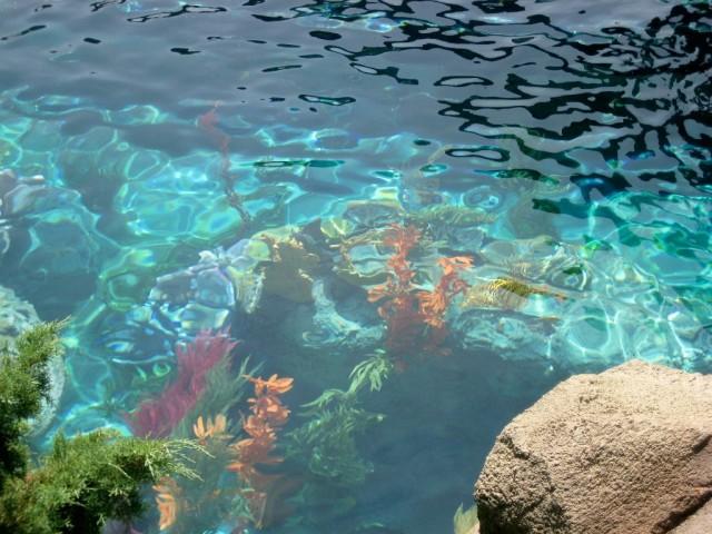 water seaweed