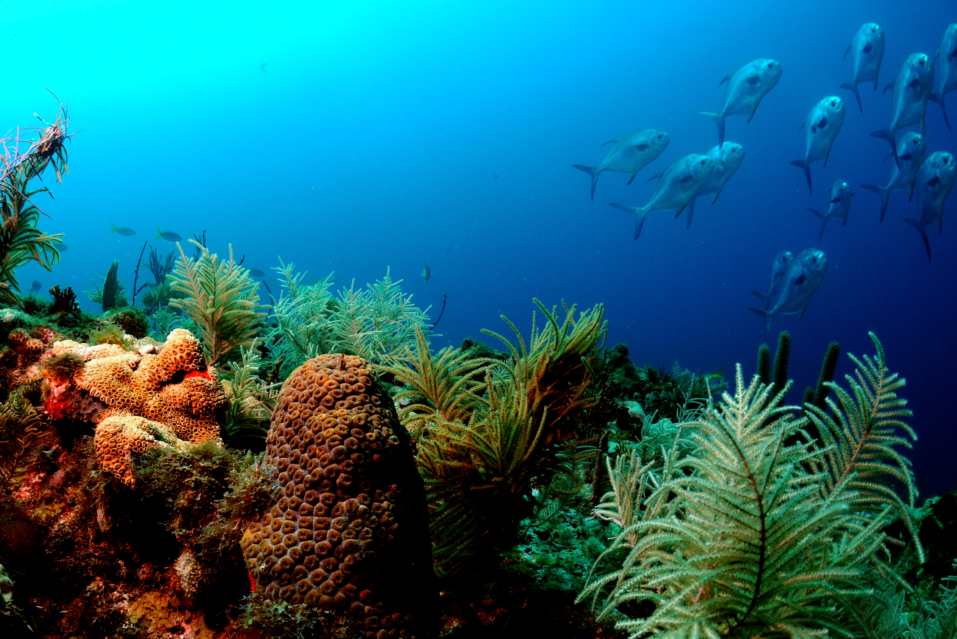 diving coral reef - photo #7